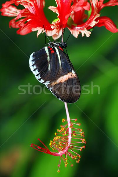 Orchidea gyönyörű pillangó ül piros virágok Stock fotó © fyletto