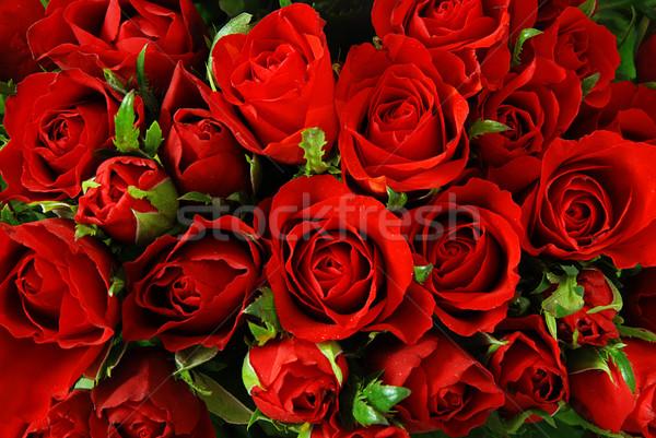 роз красные розы природного текстуры любви цветок Сток-фото © fyletto