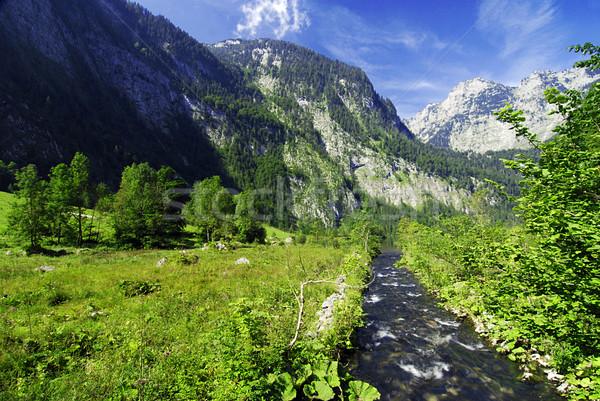 Alpine brook Stock photo © fyletto