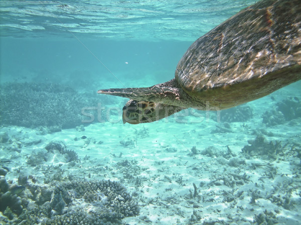 Tortue mer natation poissons Photo stock © fyletto