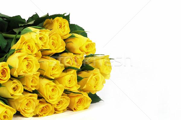 Geel rozen bladeren natuurlijke textuur vers Stockfoto © fyletto