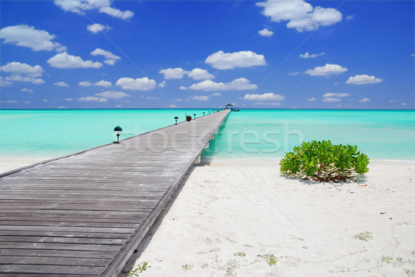 Jetty in the Maldives Stock photo © fyletto