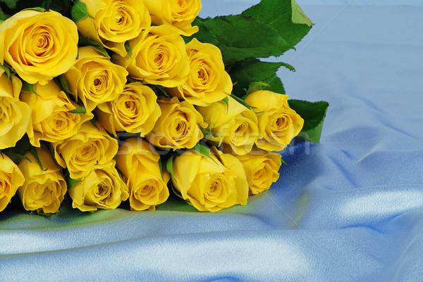желтый роз красивой синий атласных Сток-фото © fyletto