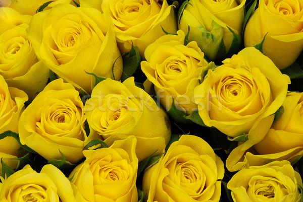 żółty róż pozostawia naturalnych tekstury świeże Zdjęcia stock © fyletto