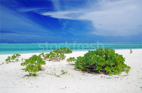 Tropische paradijs Maldiven witte strand turkoois Stockfoto © fyletto