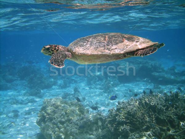 Сток-фото: морем · черепахи · плаванию · коралловый · риф · различный · рыбы
