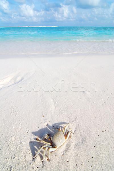 Cangrejo playa tropical pequeño hermosa playa naturaleza Foto stock © fyletto