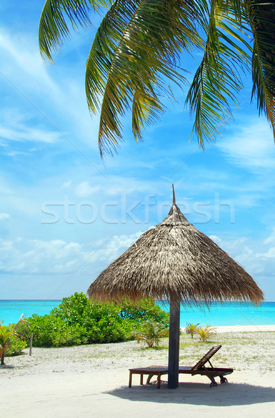 расслабиться Мальдивы красивой белый пляж Palm Сток-фото © fyletto