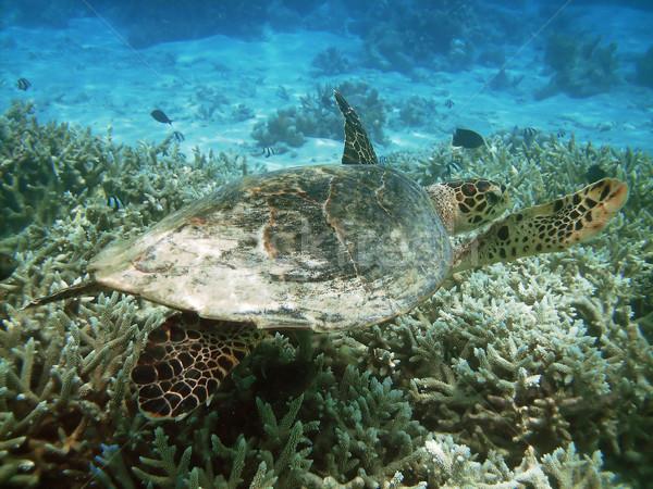 Stockfoto: Schildpad · zee · zwemmen · koraalrif · vis