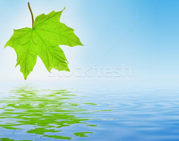 свежие лист зеленый Maple Leaf весны фон Сток-фото © fyletto