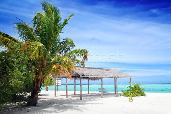 Beach in Maldives Stock photo © fyletto