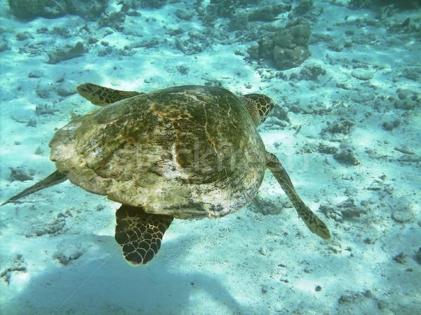 Tortuga mar natación peces Foto stock © fyletto