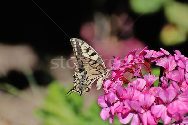 Virág iszik szépség nyár fotó trópusi Stock fotó © fyletto