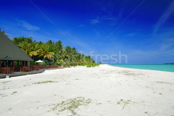 Vakantie eiland Maldiven mooie witte strand Stockfoto © fyletto