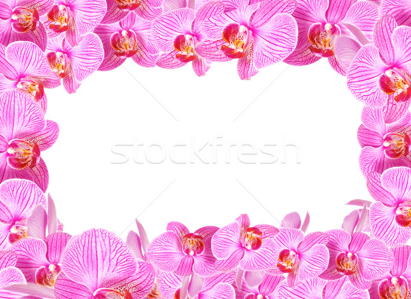Orchid frame Stock photo © fyletto