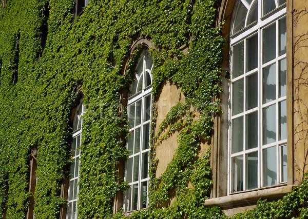 стены вино Windows библиотека листьев Сток-фото © fyletto