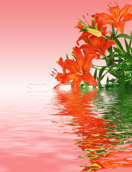 Rosso gigli bella fioritura foglie verdi fiore Foto d'archivio © fyletto