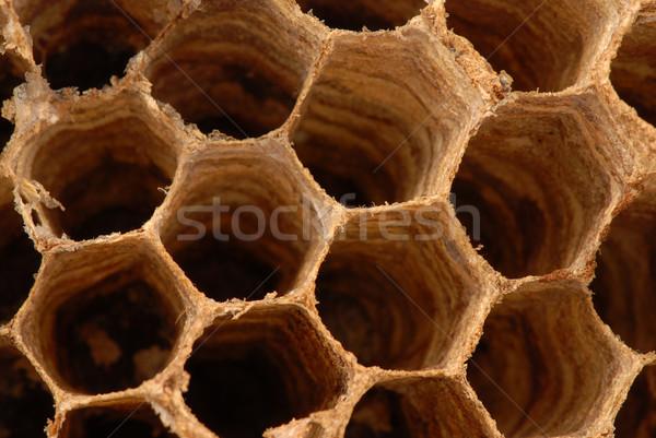 Hornet nest macro Stock photo © fyletto