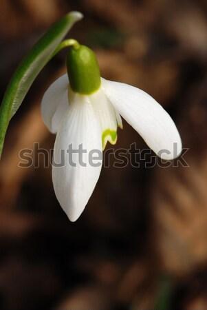 マクロ 新鮮な 花 成長した 古い ストックフォト © fyletto