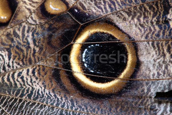 Farfalla ala dettagliato macro ornamenti vene Foto d'archivio © fyletto
