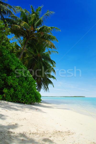 Strand Maldiven mooie tropisch strand turkoois zee Stockfoto © fyletto