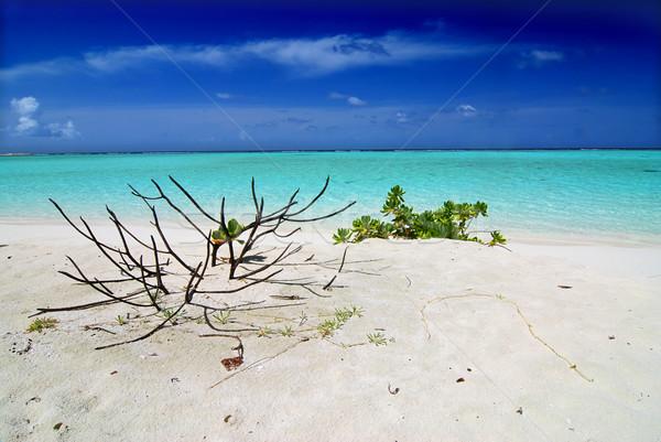 Trópusi édenkert Maldív-szigetek fehér tengerpart növényzet Stock fotó © fyletto