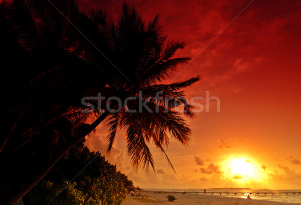Zonsondergang Maldiven mooie kleurrijk zee palm Stockfoto © fyletto