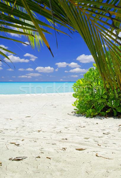 Plage tropicale belle sable blanc Palm Maldives arbre Photo stock © fyletto