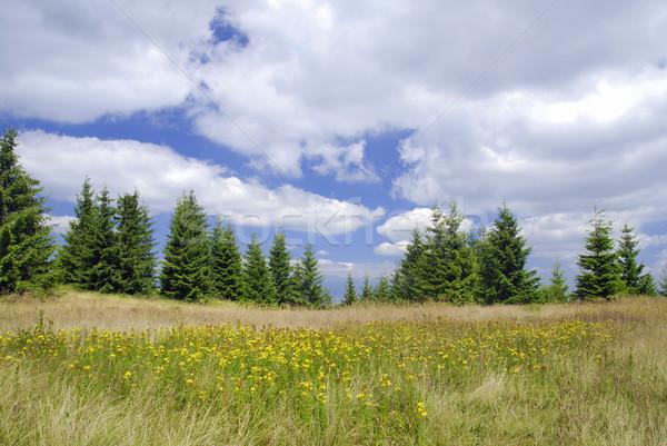 луговой горные желтые цветы небе лес Сток-фото © fyletto