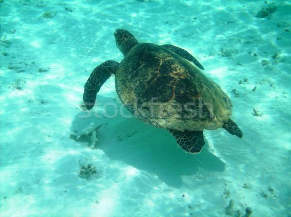 Сток-фото: черепахи · коралловый · риф · морем · плаванию · природы · зеленый