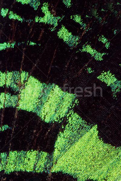 Vlinder super macro foto mooie vleugel Stockfoto © fyletto