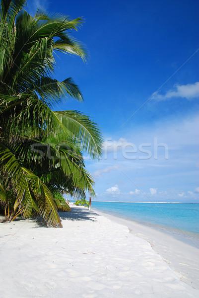 Spiaggia Maldive bella spiaggia tropicale turchese mare Foto d'archivio © fyletto