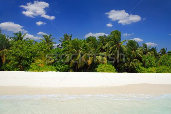 熱帯ビーチ 美しい ココナッツ 手のひら 白砂 背景 ストックフォト © fyletto