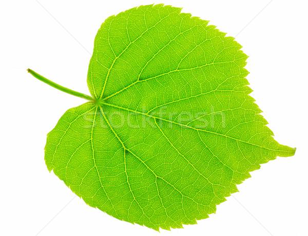 Fresh green leaf Stock photo © fyletto