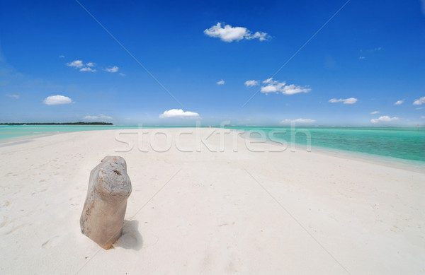 Stockfoto: Tropisch · strand · mooie · caribbean · wit · zand · water · boom