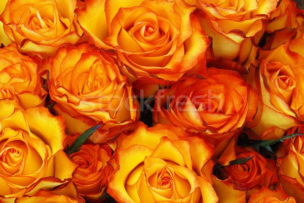 オレンジ バラ 葉 自然 テクスチャ 新鮮な ストックフォト © fyletto