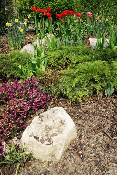 Spring garden Stock photo © fyletto