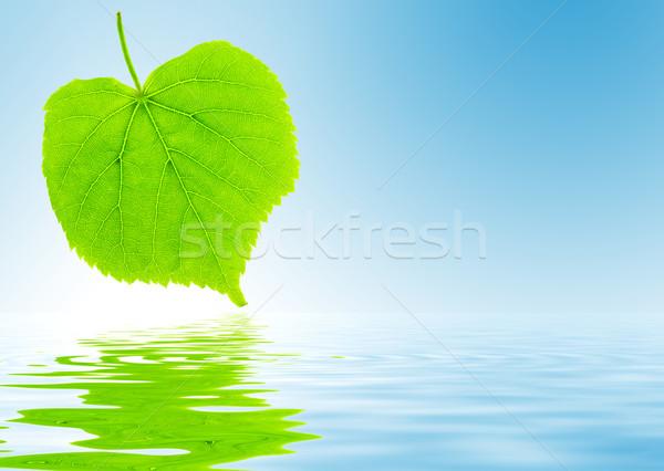 Frescos hoja verde cal árbol primavera Foto stock © fyletto