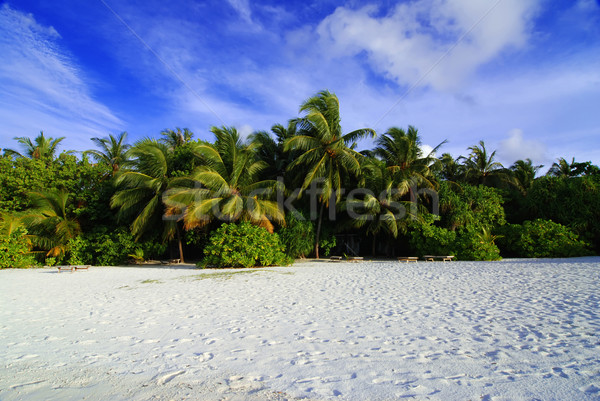 Tengerpart kókusz pálmafák gyönyörű trópusi tengerpart fehér homok Stock fotó © fyletto