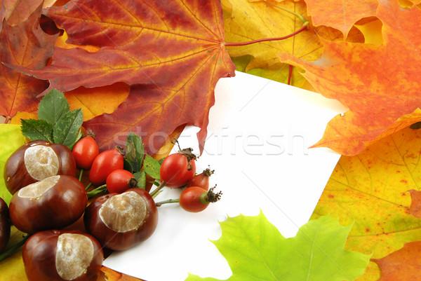 Najaar kleurrijk esdoorn bladeren witte kaart Stockfoto © fyletto