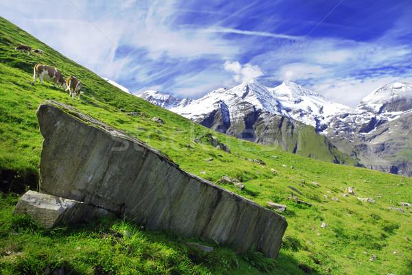 Alpes vue alpine luxuriante prairie ciel Photo stock © fyletto