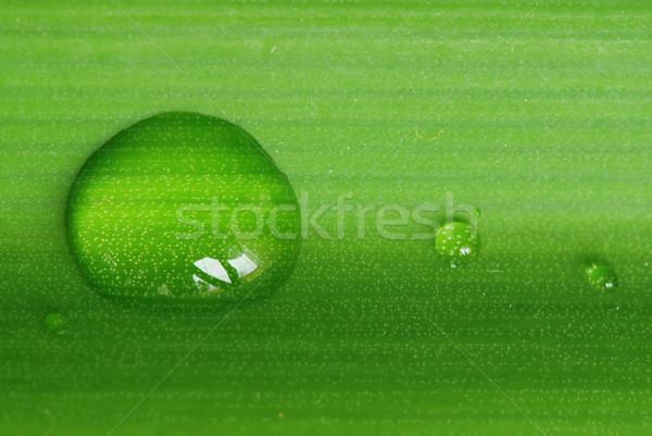 Gocce foglia rugiada acqua verde fresche Foto d'archivio © fyletto