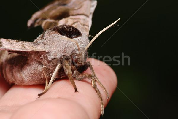 Szczegół noc posiedzenia strony Motyl oczy Zdjęcia stock © fyletto