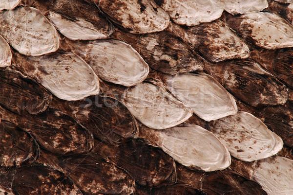 Snake skin Stock photo © fyletto
