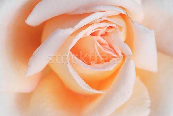 Bella dettaglio offuscata esterno petali Foto d'archivio © fyletto