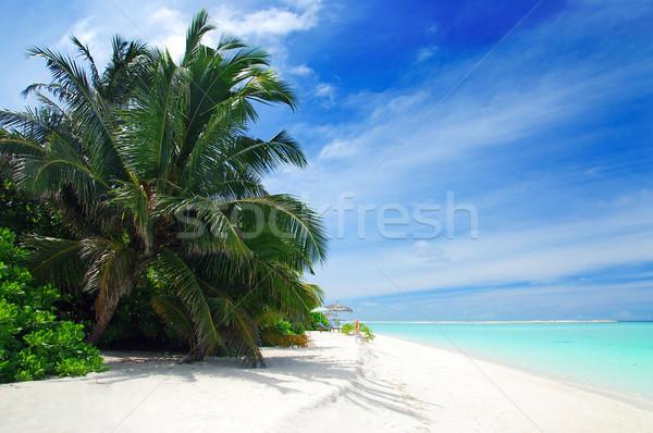 Foto stock: Playa · Maldivas · hermosa · playa · tropical · turquesa · mar