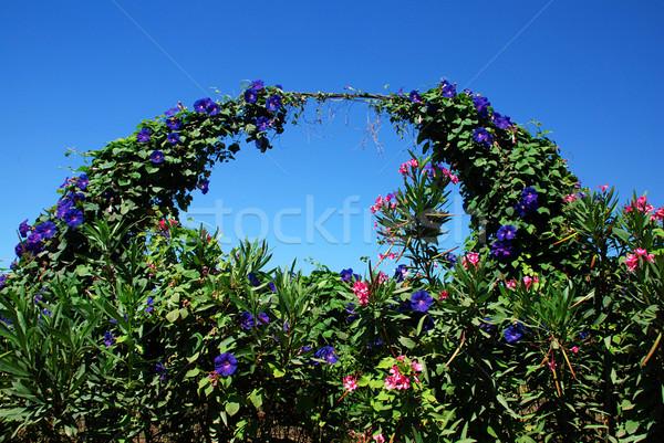 Jardín arco detalle florecer completo flores Foto stock © fyletto