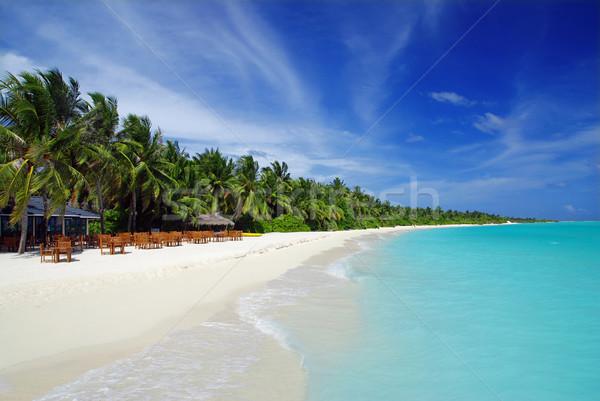 тропические рай Мальдивы кокосового ладонями белый Сток-фото © fyletto
