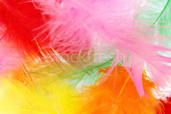 Színes tollak gyönyörű puha különböző színek Stock fotó © fyletto