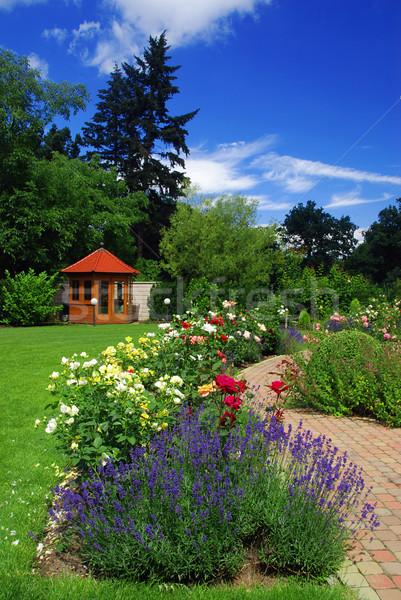 Jardin roses belle floraison brique chemin Photo stock © fyletto